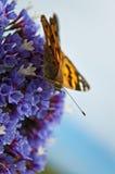 Orange butterfly. On purple flower Royalty Free Stock Photography