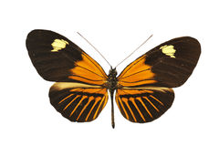 Orange butterfly. Beautiful orange butterfly in front of white background stock photo