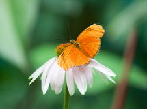 Free Orange Butterfly Stock Photography - 22249762