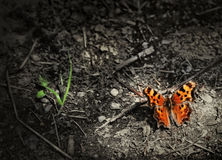 Orange Butterfly. A butterfly on the forest floor Stock Photo
