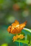 Orange butterfly. Macro shot of beautiful orange butterfly stock photo