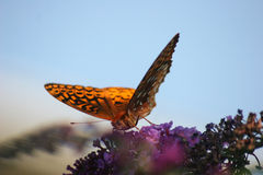 Orange Butterfly. Vibrant Orange Butterfly on stock photography