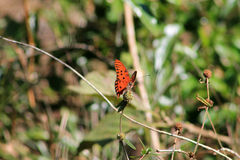 Orange butterfly against green backgound stock photo