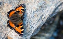 Orange butterfly on a rock. Orange butterfly Aglais urticae on a rock stock image