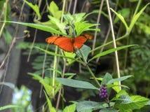Orange butterfly. Beautiful orange butterfly in the Emmen zoo royalty free stock photography