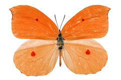 Orange butterfly. Beautiful orange butterfly isolated on white background stock photos