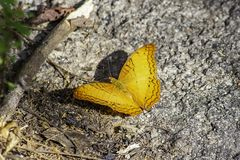 Orange butterfly with beautiful patterns on the rocks stock images