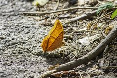 Orange butterfly with beautiful patterns on the rocks.  stock photos