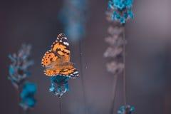 Orange butterfly on blue flowers on an blur background. Orange small butterfly on blue flowers on an blur background royalty free stock photography