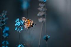 Orange butterfly on blue flowers on an blur background. Orange small butterfly on blue flowers on an blur background stock image
