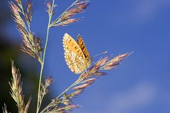 Orange butterfly and blue sky Stock Images