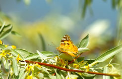 Orange butterfly on a branch. With flowers royalty free stock photo