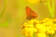 Orange butterfly on a bright sunny field. Macro, blurred stock image