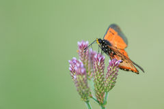 Orange butterfly on bunch of wild flowers Stock Photos
