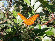 Orange butterfly. The butterfly is considered the symbol of transformation. Among others, it symbolizes happiness, beauty, inconstancy, ephemerality of nature Royalty Free Stock Photography