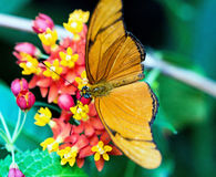 Orange butterfly. On a flower Royalty Free Stock Image