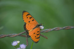 Orange butterfly on flower. With blur background Stock Image