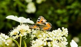 Orange butterfly on flower stock image