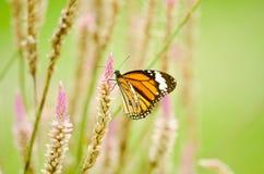 Orange butterfly on flower Royalty Free Stock Photo
