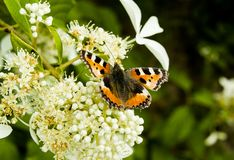 Orange butterfly on flower. Garden close up royalty free stock image