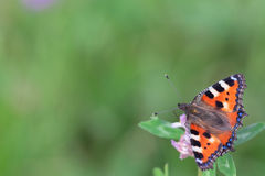Orange butterfly on a flower. On a warm day royalty free stock photos