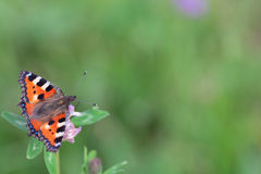 Orange butterfly on a flower. On a warm day royalty free stock images