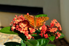 Orange butterfly in the garden. Orange butterfly on a flower in the garden Stock Photos