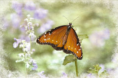 Orange Butterfly in garden on purple flowers Stock Photos