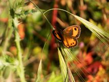 Orange butterfly on grass. Green grass in field stock photos
