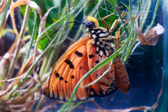Orange butterfly on the grass in jar Royalty Free Stock Photography