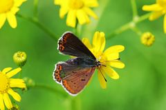 Orange butterfly on grass, macro. Photo royalty free stock photography