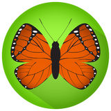 Orange butterfly in the green circle. Vector image Stock Photos