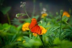 Orange butterfly in a green. Flower garden stock photo
