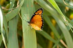Orange butterfly. On green grass macro shot royalty free stock photo