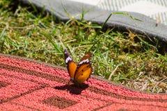 Orange butterfly. On green grass macro shot royalty free stock photos