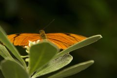 Orange butterfly on a green leaf stock photography