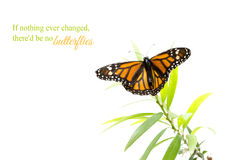 Orange butterfly on a green plant isolated on white Royalty Free Stock Photos