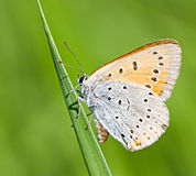 Orange butterfly on green stem Stock Photo