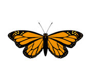 Orange Butterfly icon. Insect design. Vector graphic Royalty Free Stock Images