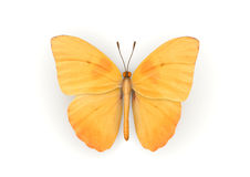 Orange Butterfly Isolated Stock Images