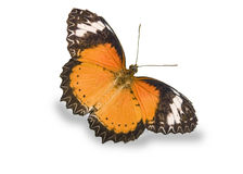Orange butterfly isolated on white Royalty Free Stock Photo