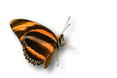 Orange butterfly isolated on white. A orange and black butterfly isolated on white royalty free stock photos