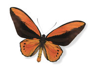 Orange butterfly isolated on white Royalty Free Stock Photos