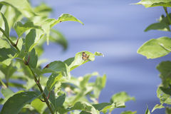 Orange Butterfly on Lakeshore Plant Royalty Free Stock Images