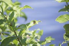 Orange Butterfly on Lakeshore Plant Stock Photo