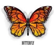 Orange butterfly monarch Stock Photo