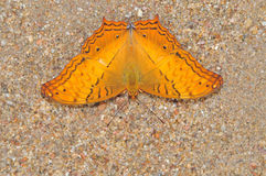 Orange butterfly on nature Stock Photography