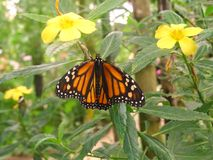 Orange butterfly. Nice orange butterfly photo detail royalty free stock photography