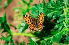 Orange butterfly. On the green grass in garden royalty free stock image