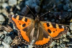 Orange butterfly. Sitting on small stones royalty free stock photos